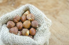 Hazelnuts in a vintage bag Stock Photos