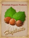 Hazelnuts vintage poster. Vector illustration. Stock Images