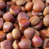 Hazelnuts w skorupach Zdjęcie Royalty Free