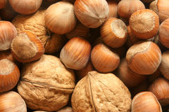 Hazelnuts and walnuts Royalty Free Stock Photos