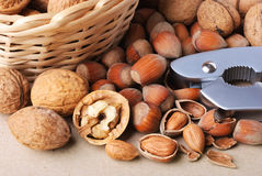 Hazelnuts, walnuts and nutcracker Royalty Free Stock Images