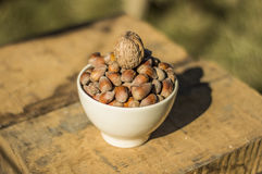 Hazelnuts and walnuts Stock Photos