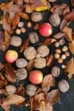 Hazelnuts, walnuts and wild apples, top view stock images
