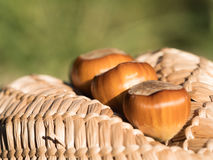 Hazelnuts on a a weaved straw abstract shape Stock Images