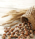 Hazelnuts and wheat Royalty Free Stock Image