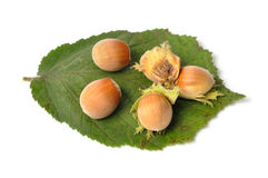 Hazelnuts on White Stock Photography