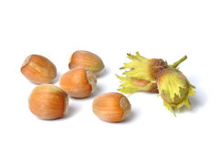 Hazelnuts on White Stock Photo