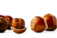 Hazelnuts on a white background Stock Photography