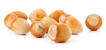 Hazelnuts  on the white background Stock Images