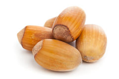 Hazelnuts on white background Stock Photography