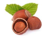 Hazelnuts on white background Royalty Free Stock Photography