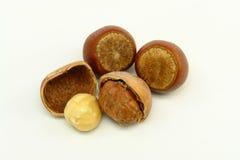 Hazelnuts on White Background Stock Photography