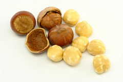 Hazelnuts on White Background Stock Photo