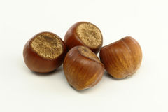 Hazelnuts on white background. Some Hazelnuts on white background stock image