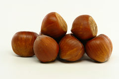 Hazelnuts on white background Stock Image