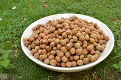 Hazelnuts in a white bowl Royalty Free Stock Photography