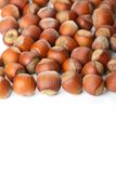 Hazelnuts on white surface Royalty Free Stock Photos