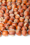 Hazelnuts on white surface Stock Images