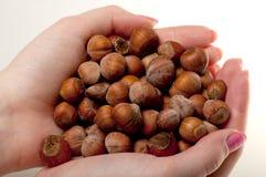 Hazelnuts in women's hands Royalty Free Stock Photos