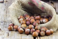 Hazelnuts on wooden background stock image