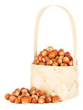 Hazelnuts In Wooden Basket Royalty Free Stock Photo