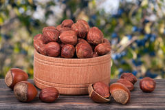 Hazelnuts in a wooden bowl on  dark board with blurred garden background Stock Photo