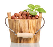 Hazelnuts in wooden bucket isolated on white Stock Images