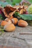 Hazelnuts on wooden plank Stock Photos