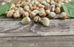Hazelnuts on wooden table, selective focus royalty free stock photo