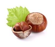 Hazelnuts z liściem Zdjęcie Stock
