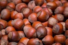 Hazlenuts Στοκ Εικόνες