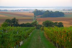 Hazy Autumn Morning In Vineyard, Slovenia. View on Tešanovci and Prekmurje plain from vineyards in Suhi Vrh in Goričko hills, Slovenia in hazy morning in stock photos