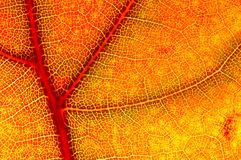 Hazy close-up of a autumn leaf Royalty Free Stock Image