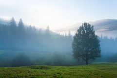 Hazy daybreak in mountain valley. Misty daybreak in summer Carpathian mountain, Ukraine (with mist clouds Stock Photography