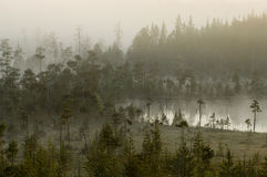 Hazy distance in forest bog. Morning in forest. Fog on the surface of water. Tranquil lake Royalty Free Stock Photo