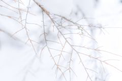 Hazy faded tree branch background photo with no leaves. Muted background photo, suitable for copy space or text. Faded tree branch background photo without royalty free stock photos