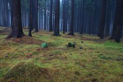 Hazy forest Stock Images