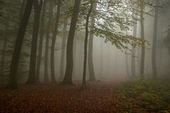 Hazy Forest Royalty Free Stock Photography