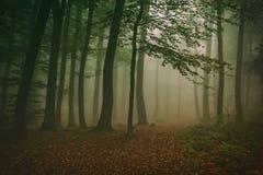 Hazy Forest Stock Photo