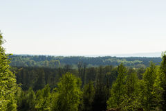 Hazy forest view Stock Photos