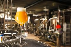 Hazy IPA beer at the brewery. A glass of hazy IPA beer standing on a tank in a functional brewery royalty free stock photography