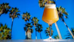 Free Hazy IPA Craft Beer In Teku Glass With Tropical Palm Trees And Blue Sky Stock Photo - 180526330