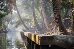 Hazy jungle Stock Image