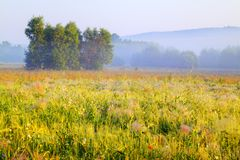 Hazy morning royalty free stock photography