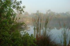 Hazy Morning. A hazy morning along a pond royalty free stock photo