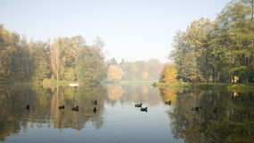 Hazy morning in autumn park.  Royalty Free Stock Image