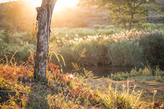 Hazy summer sunlight floods river valley Stock Photography