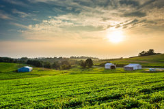 Hazy summer sunset over farm fields in rural York County, Pennsy Royalty Free Stock Photo