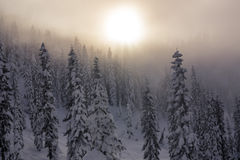 Hazy Sunset Over Layers of Snow Covered Trees in Mountain Forest Royalty Free Stock Photos