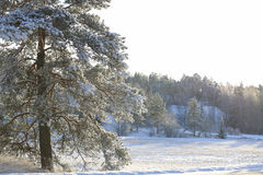 Hazy Winter Day royalty free stock images